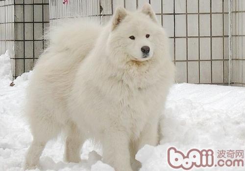 冬天狗狗怕不怕冷