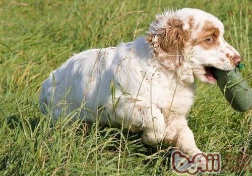 狗狗冬天可以喝冷水吗