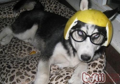 狗狗身体抽搐的原因