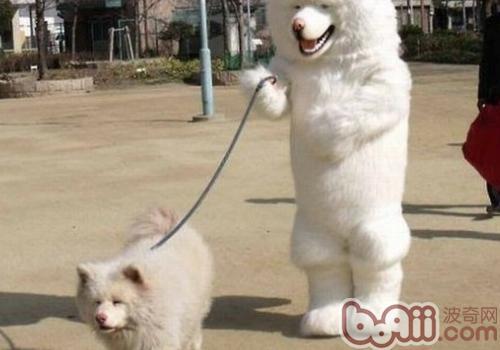 狗狗多大能带出去溜