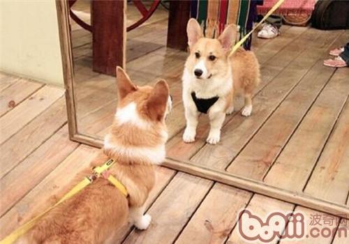 【测试】狗狗自信度有多高