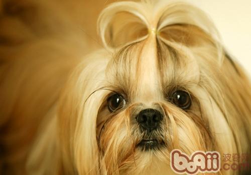中国的名犬有哪些