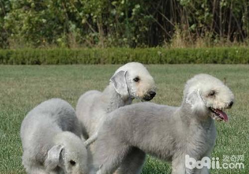 如何判断狗狗是否缺钙