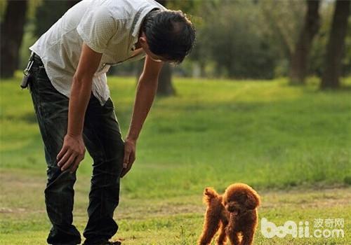 【测试】看看你的狗狗灵活性有多高
