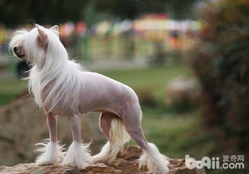 什么品种的狗不掉毛