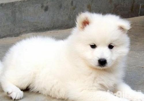 如何让狗狗的被毛更加光滑漂亮