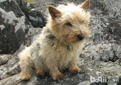 犬按被毛特征可分为哪几类