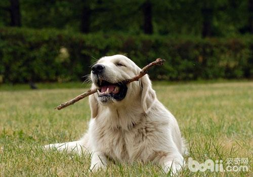 狗狗一直要跟主人玩怎么办