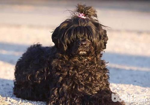 狗狗过冬的几个建议