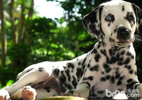 为狗狗美容其实很重要