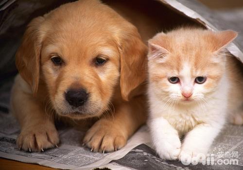 如何让猫和狗和平相处