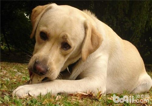 狗狗毛发不健康的原因之干燥季节如何防静电