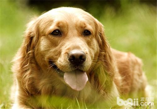 狗粮鉴别的四种常见方法