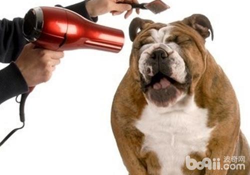 狗狗洗完澡不吹干有什么危害
