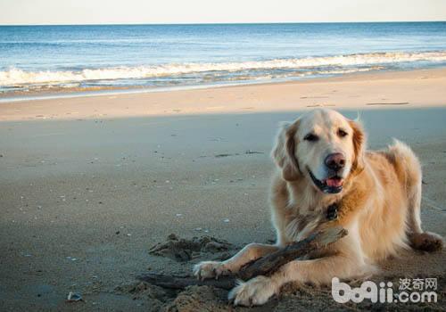 你真的准备好带狗狗外出旅行了吗