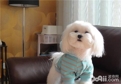 狗狗太瘦的原因分析