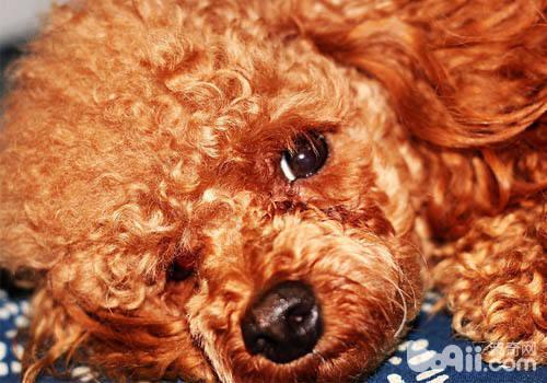 为什么狗狗走丢的事情常常发生