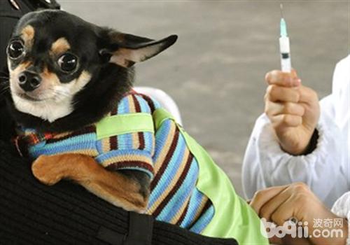 狗狗免疫失败的原因及解决对策