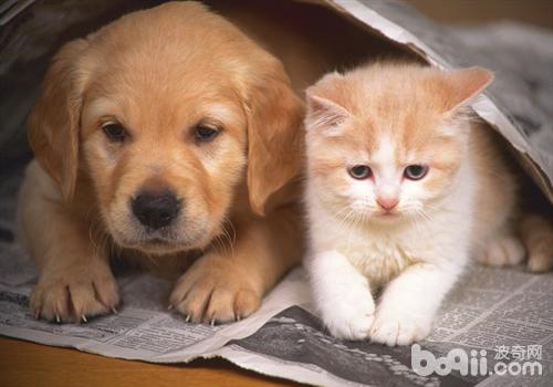 狗猫真的可以共处一室吗