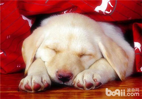 狗狗睡眠不好的原因之解决办法