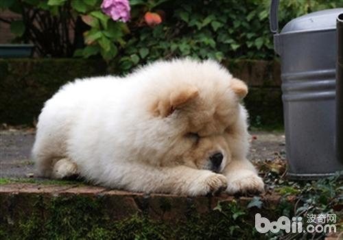 狗狗越养越胖的原因分析