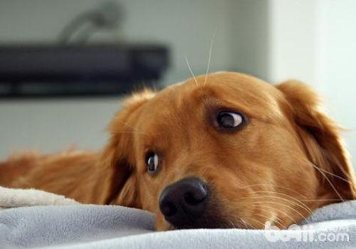 狗狗节后综合症的预防
