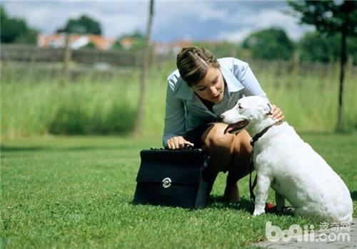 如何与陌生狗狗做朋友
