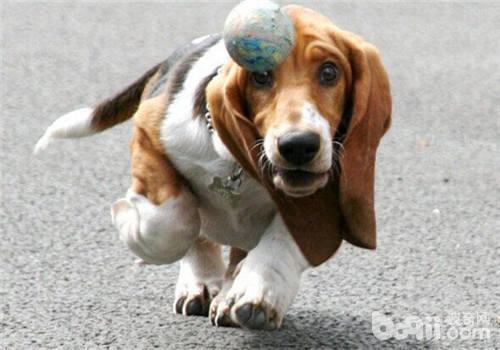 老年狗狗运动的重要性