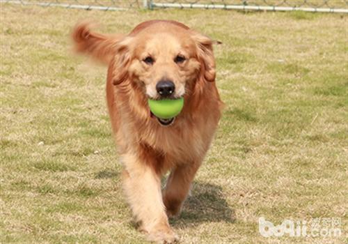合理的运动对狗狗健康有好处
