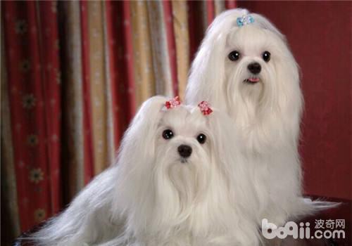春节饲养宠物如何不影响走亲访友