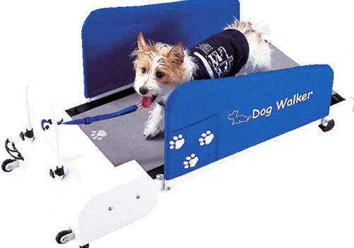 狗狗跑步机是否只是噱头