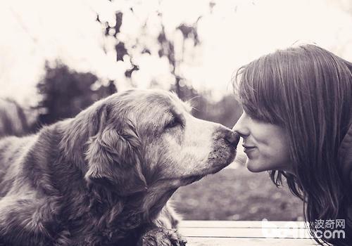 狗狗独处太久有什么影响