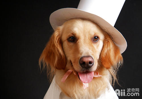 为狗狗拍照为何这么贵