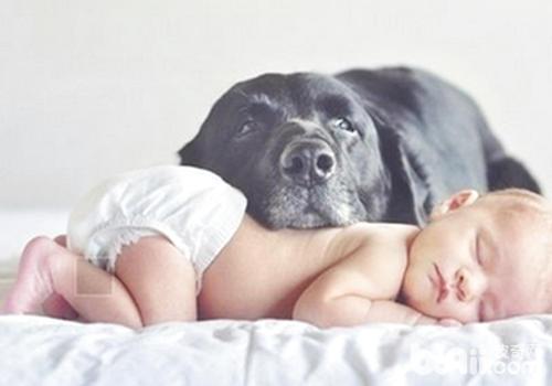 养狗家庭的孩子是否更健康