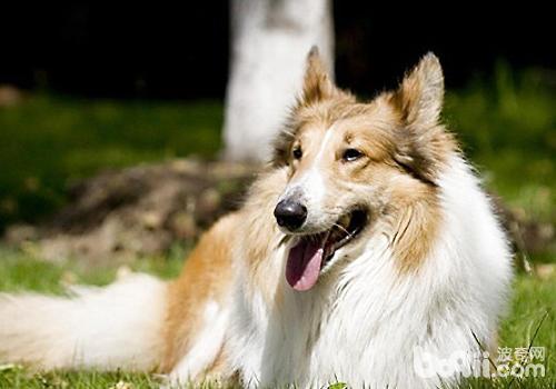 狗狗对糖尿病人的帮助