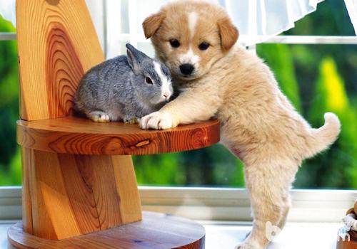 人的感情狗狗是否真的懂