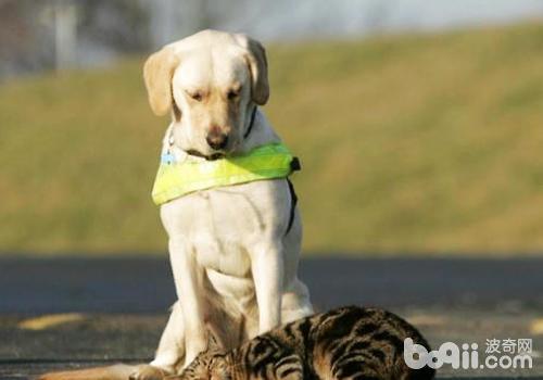 正确驯养狗狗的方法