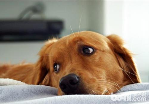 把狗狗送人会对狗狗有哪些影响
