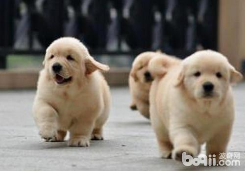哪些文静的狗狗适合孩子饲养