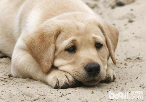 狗狗买回来没几天就死,谁的责任?