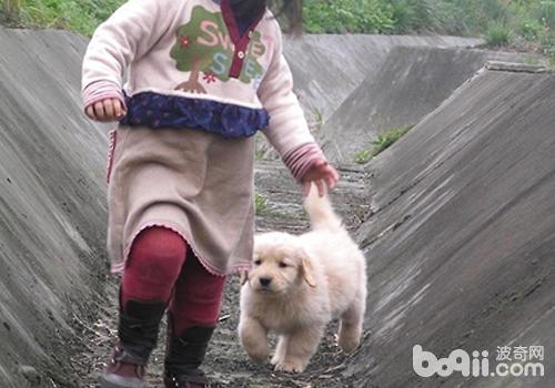 为什么狗狗喜欢追着小孩