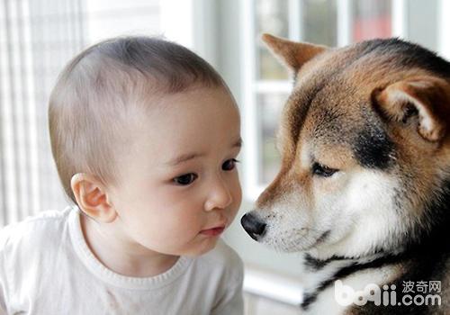 狗狗不喜欢孩子怎么办