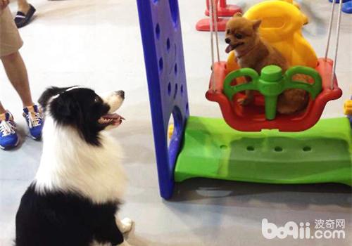 遛狗时需要注意什么?