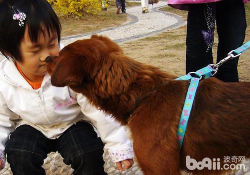 孩子养狗要养成良好的卫生习惯
