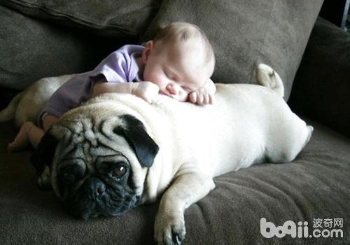 要让孩子与狗狗建立正确的等级关系