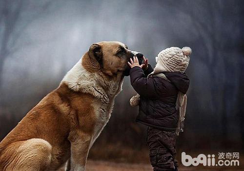 孩子养狗要了解的一些事