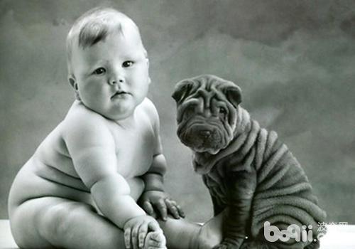 养狗有助于孩子减肥