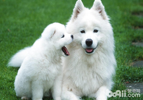 饲养狗狗能降低心脏病发病几率