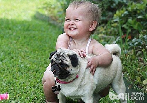 狗狗能增强孩子的责任感