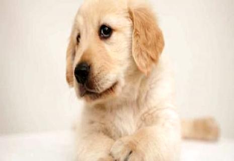 狗狗能够吃苹果吗?狗狗能吃哪些生果?
